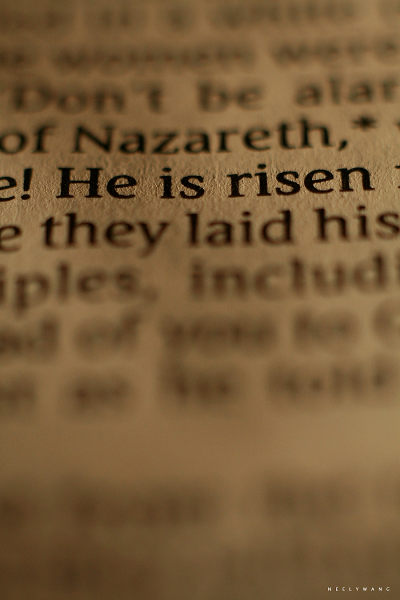 macro photography image of bible scripture