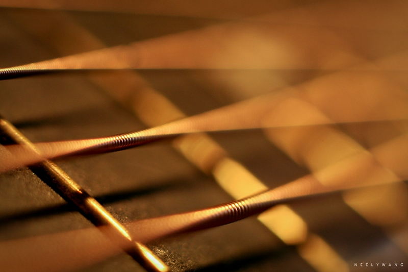 macro photography image of guitar strings
