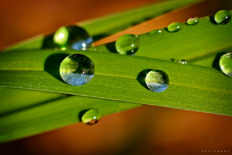 image of water droplets on grass