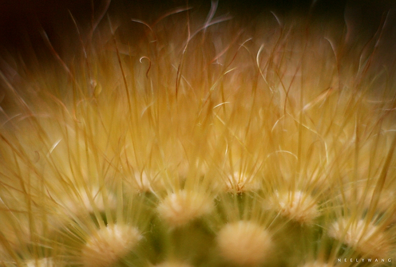 macro photography image of cactus needles