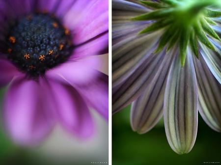 macro photography image of daisy