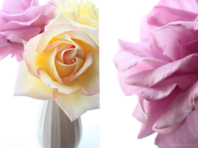 lavender roses and yellow roses