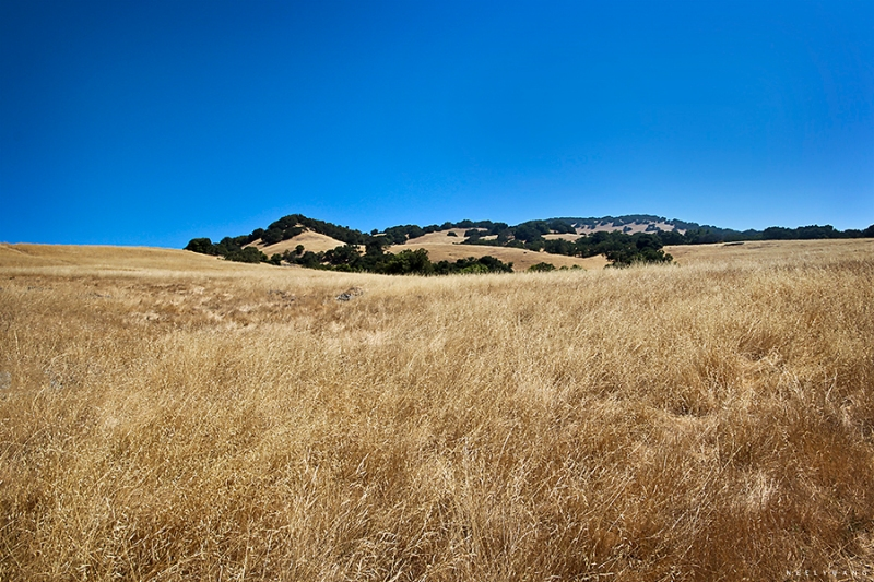 mt. burdell