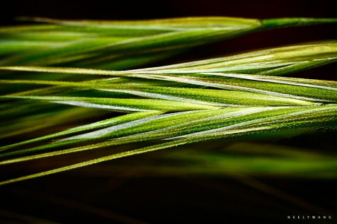 macro photography of green grass