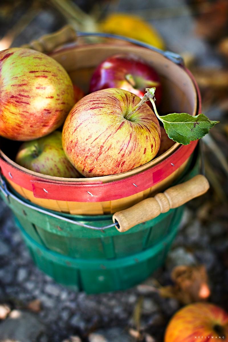 twin hill farms apples