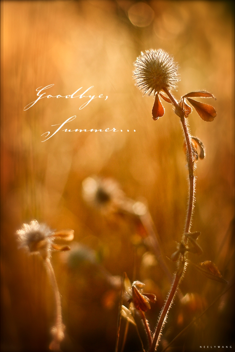 backlight flowers at golden hour