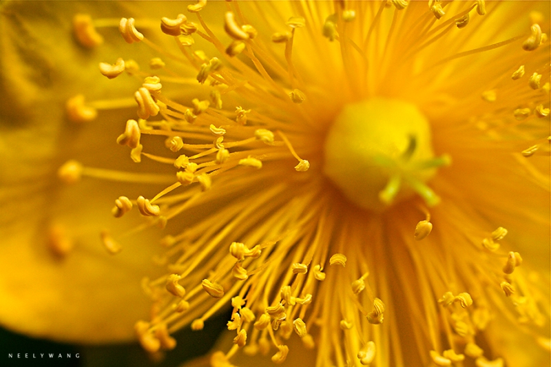 macro photo of yellow flower