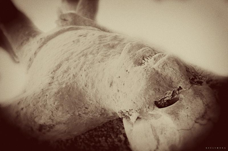 Bodies from Pompeii, Naples