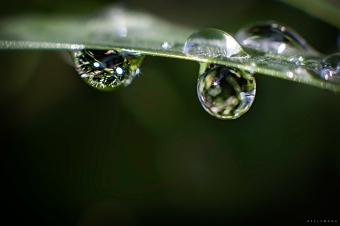 drops of sunshine | neely wang