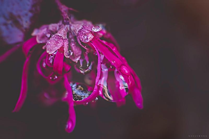 confetti flower dew drops photo | neely wang
