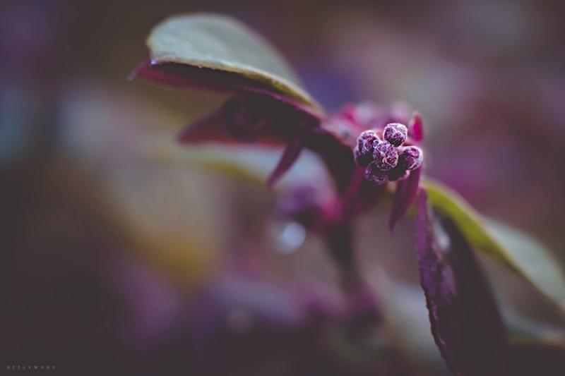 confetti flower photo | neely wang