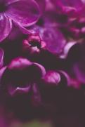 Lilac | Neely Wang