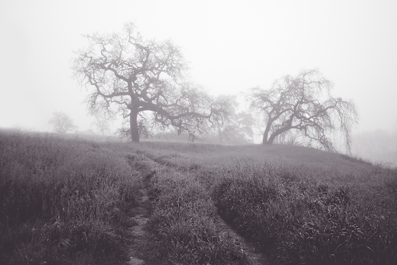 Foggy Path | Neely Wang