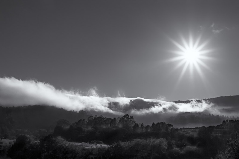 Mt Tam Fog | Neely Wang