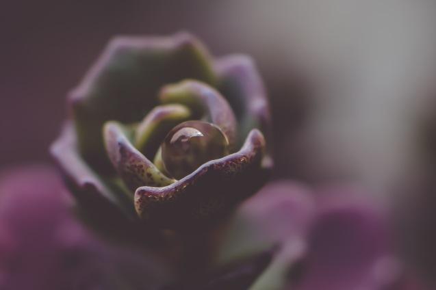 Macro Succulent | Neely Wang