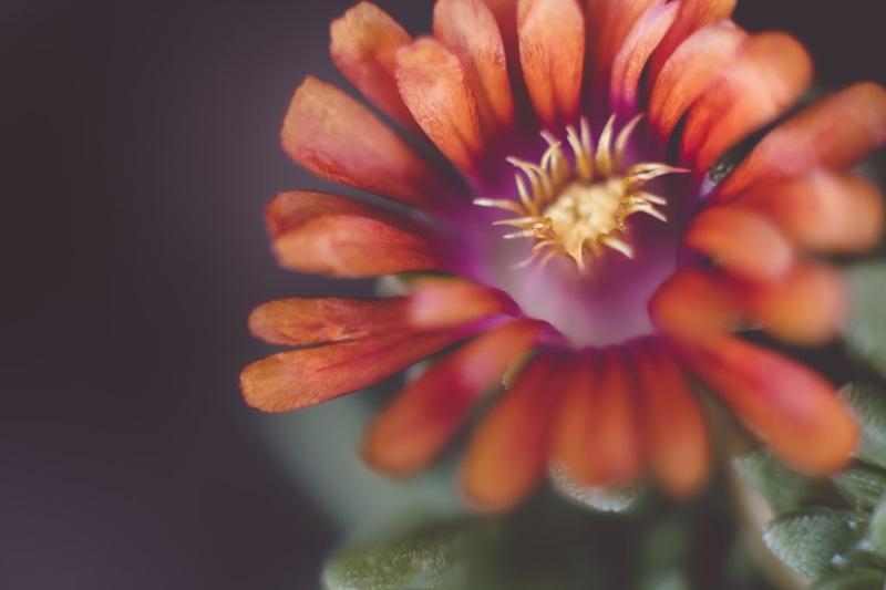 Succulent Flower | Neely Wang
