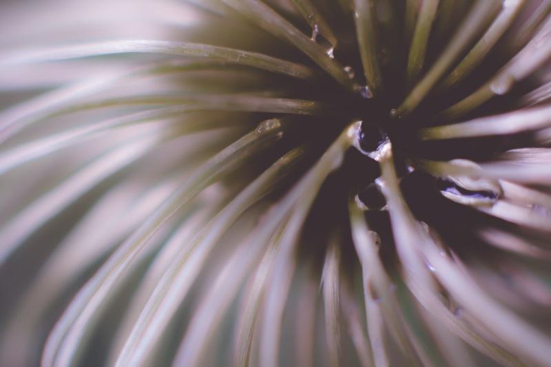 Macro Clematis | Neely Wang