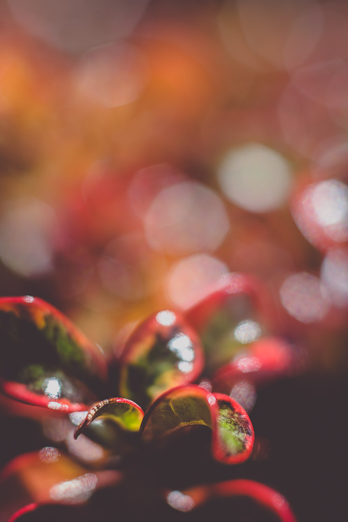 Macro Flower | Neely Wang