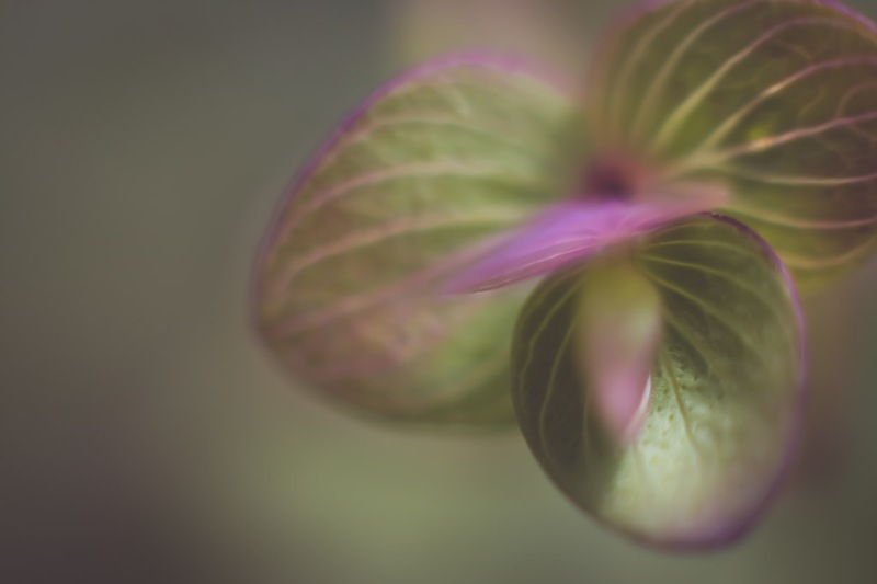 Macro Leaves | Neely  Wang