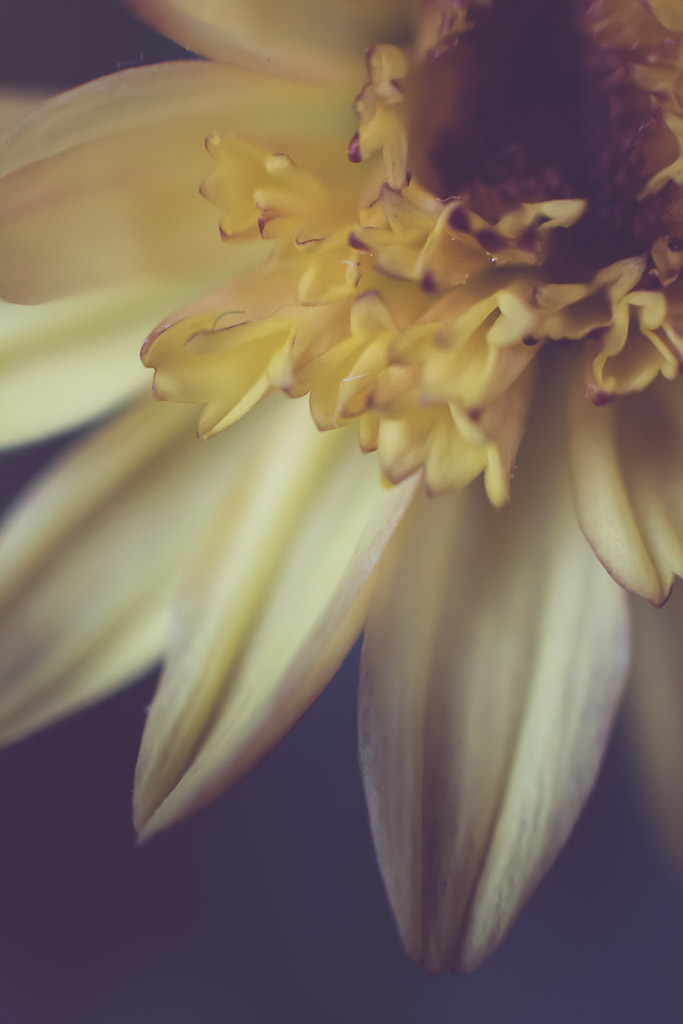 button mums | Neely Wang Photography
