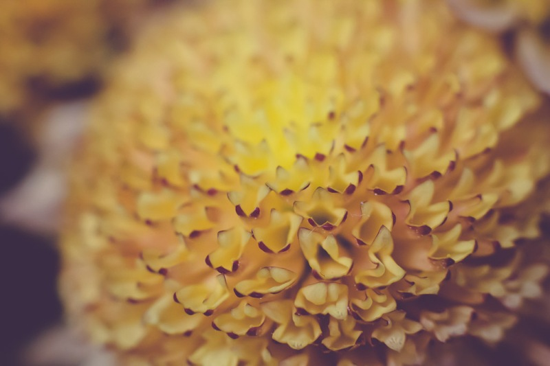 mums | Neely Wang Photography