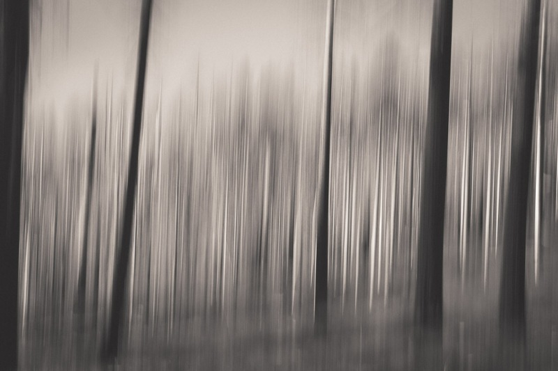 The Forest of Trees | Neely Wang Photography
