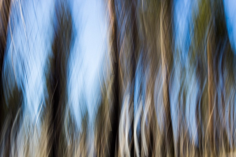 A Forest of Blur | Neely Wang Photography