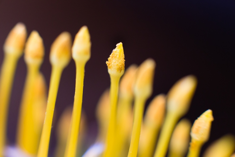 Neely Wang Macro Flower Photography