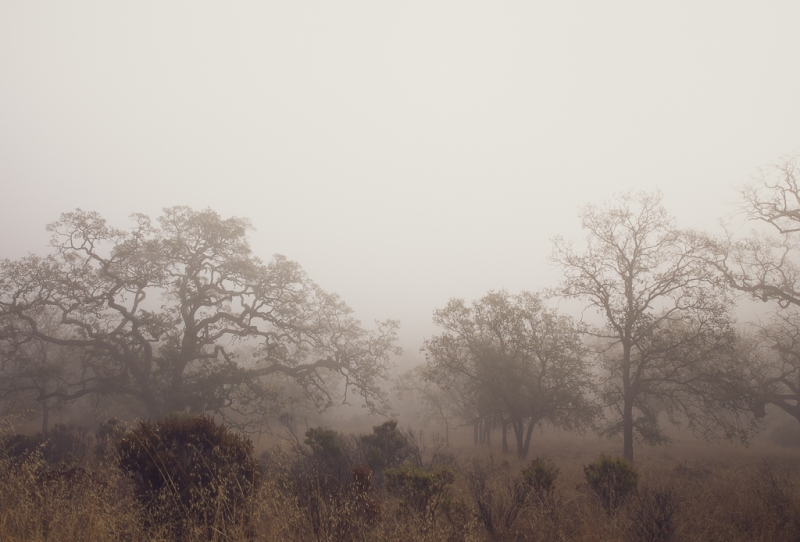 Fog | Neely Wang Nature Photography