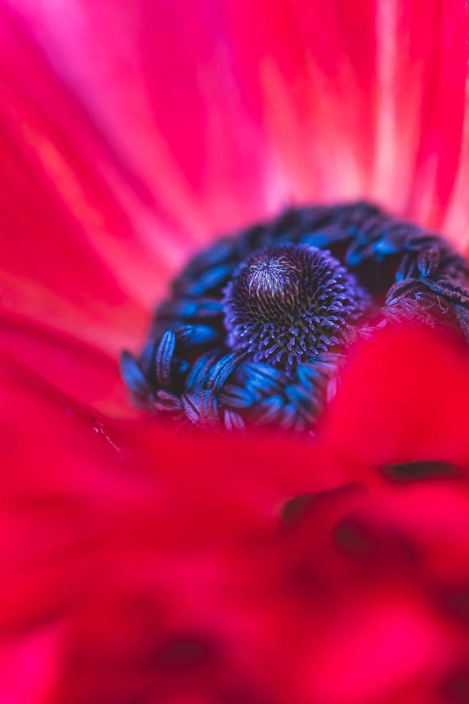 Neely Wang Macro Flower Photography