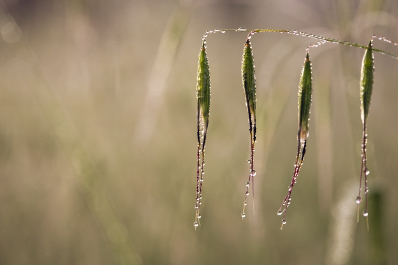 Macro Dew | Neely Wang Photography